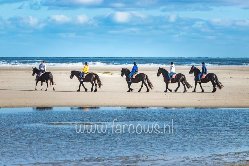 Beach Ride Ameland Group